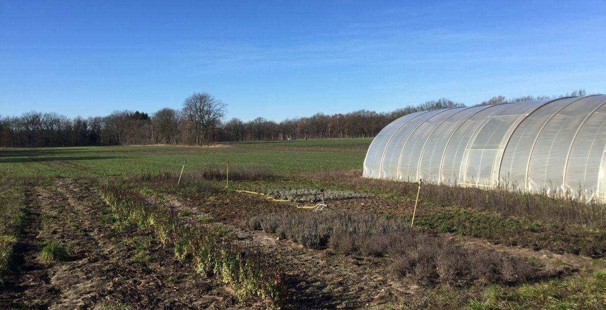 Erfahrene Gemüsebau-Saisonkraft (w/m/d) (20 Stunden) ab 01. April bis Mitte November gesucht
