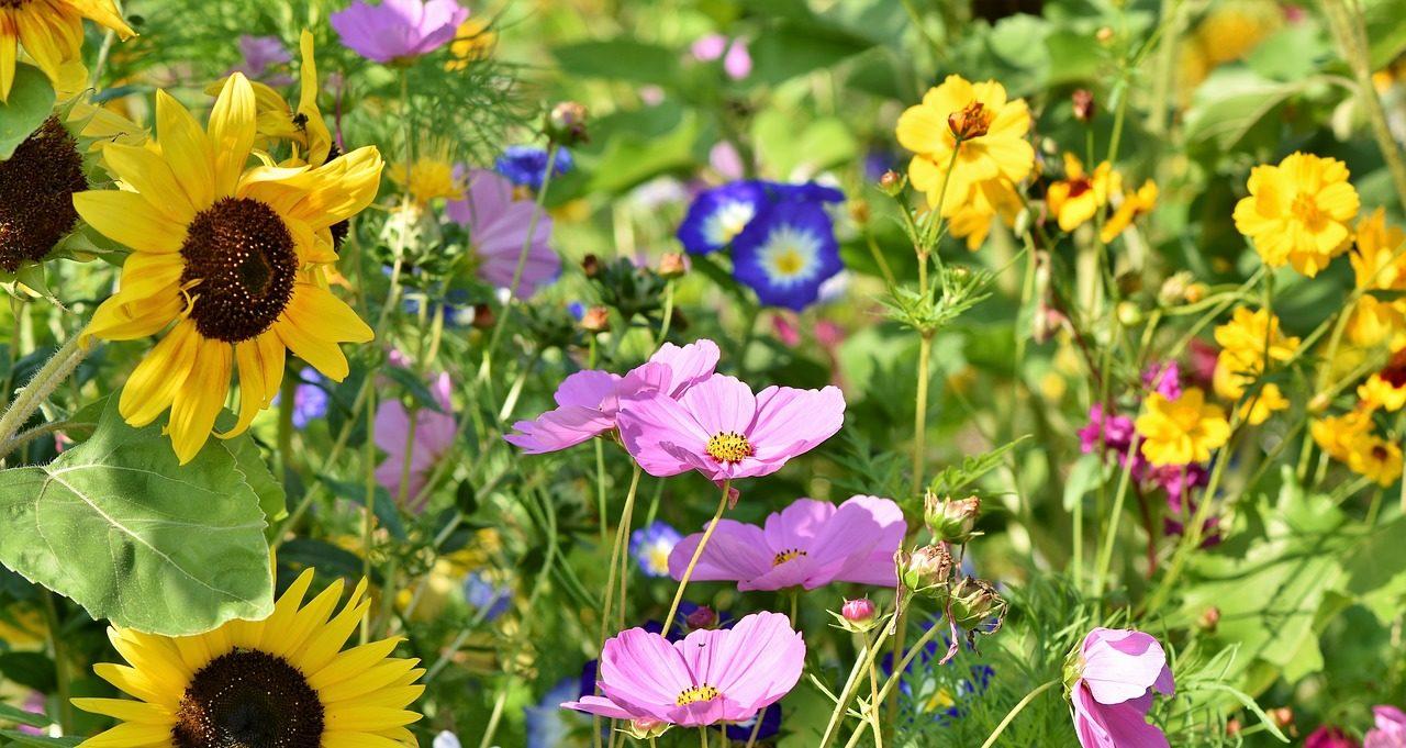 Blühstreifen für mehr Artenvielfalt